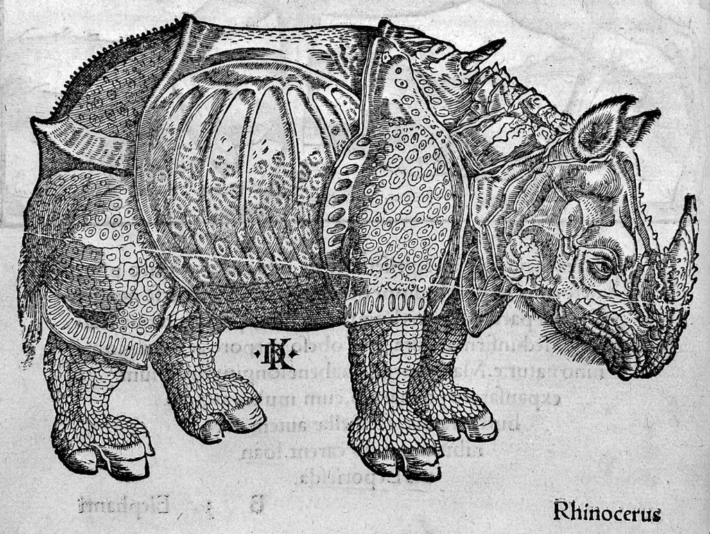 Lycosthenes, Rhinoceros